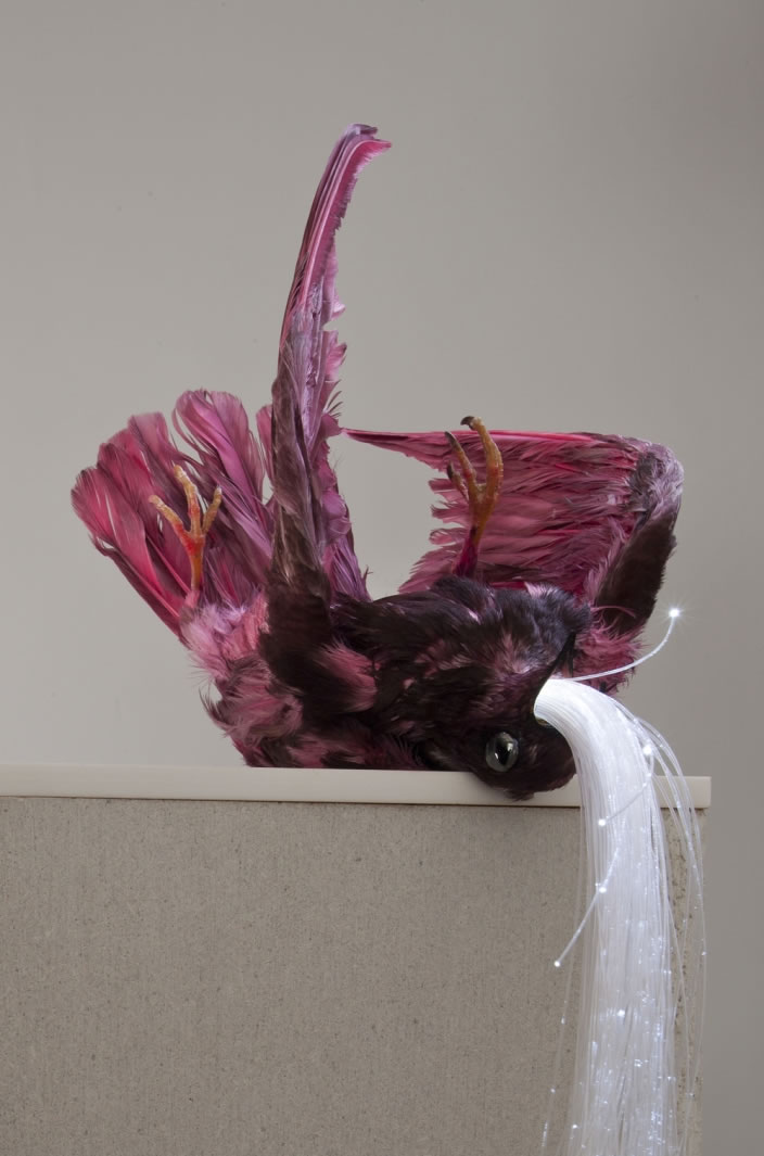 Untitled, 2012, Pigeon taxidermy, pink dye, hematite & fibre optic light